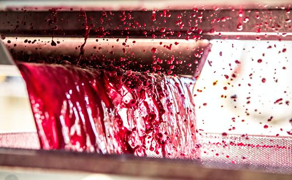 和西班牙VINTEC一起 探讨葡萄酒口味的起源 品葡萄酒底蕴文化